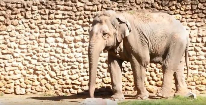 Con voi buồn nhất thế giới qua đời sau 43 năm bị nhốt - Ảnh 4.