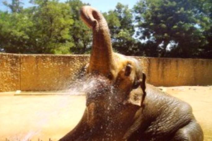 Con voi buồn nhất thế giới qua đời sau 43 năm bị nhốt - Ảnh 3.