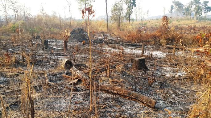 Ngang nhiên đốt phá rừng vùng biên - Ảnh 1.