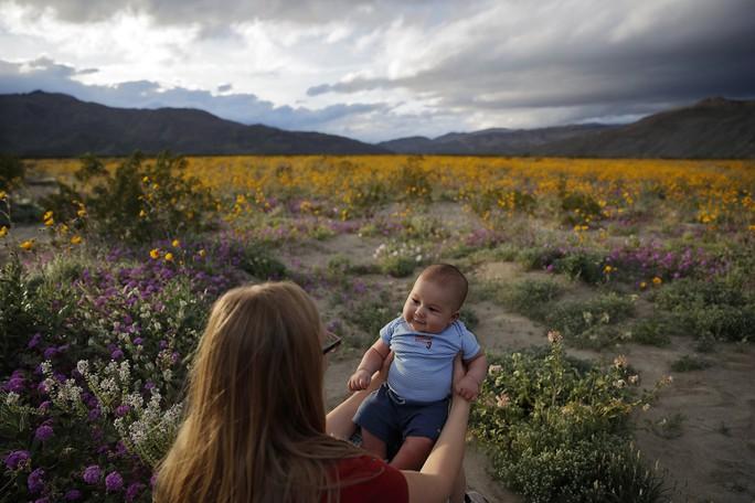 Choáng ngợp hoa dại nở rộ trên sa mạc California - Ảnh 3.