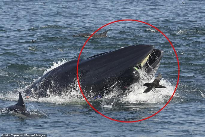 Khoảnh khắc phó mặc bản năng của thợ lặn rơi vào miệng cá voi - Ảnh 1.