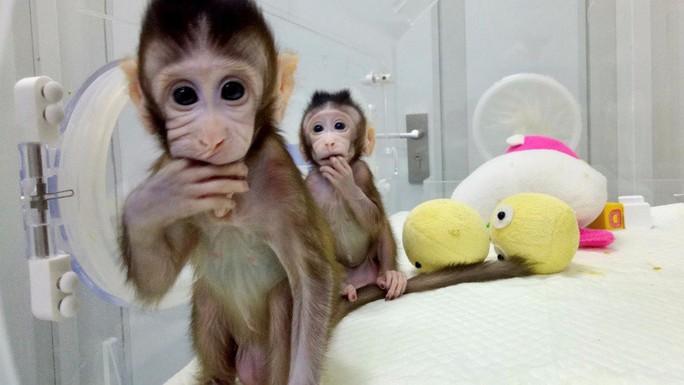 Trung Quốc gây sốc với thí nghiệm nhân cách hóa loài khỉ - Ảnh 1.