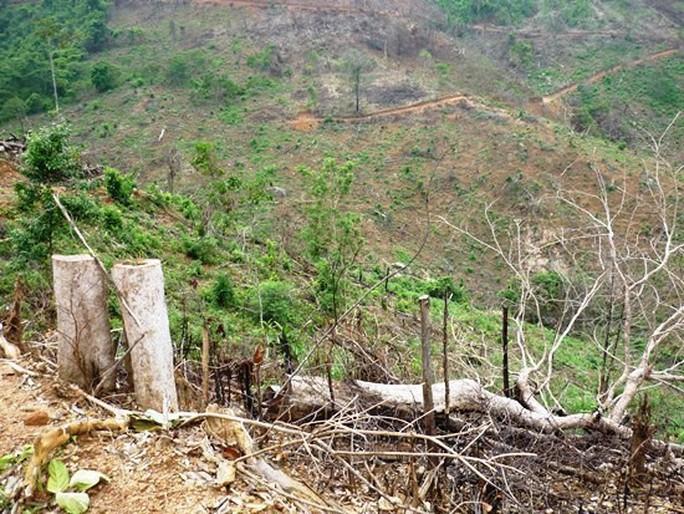 Bình Định: Khởi tố vụ án phá 11.300 m2 rừng tự nhiên - Ảnh 1.