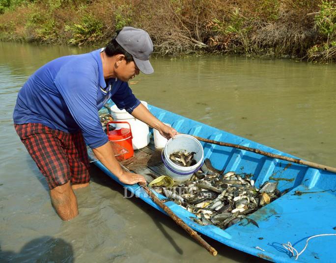 Ngợp với cảnh mỏi tay vớt cá dạt vào bờ ở Cà Mau, Bạc Liêu - Ảnh 1.