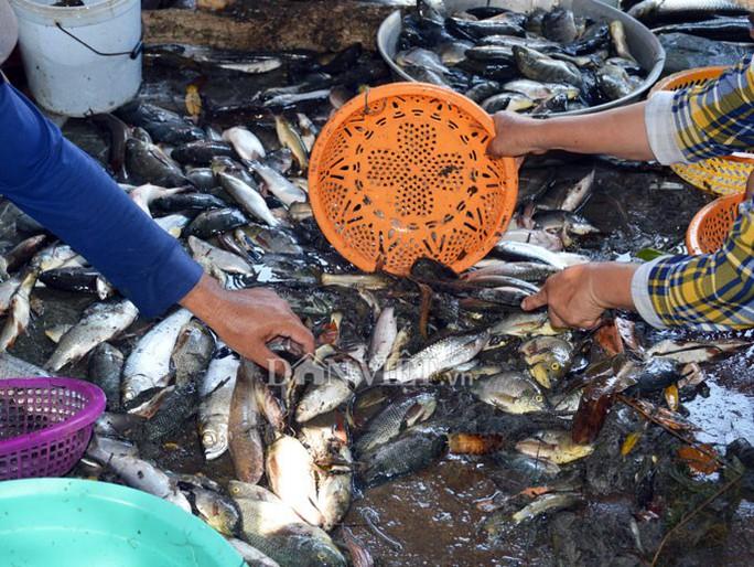 Ngợp với cảnh mỏi tay vớt cá dạt vào bờ ở Cà Mau, Bạc Liêu - Ảnh 13.