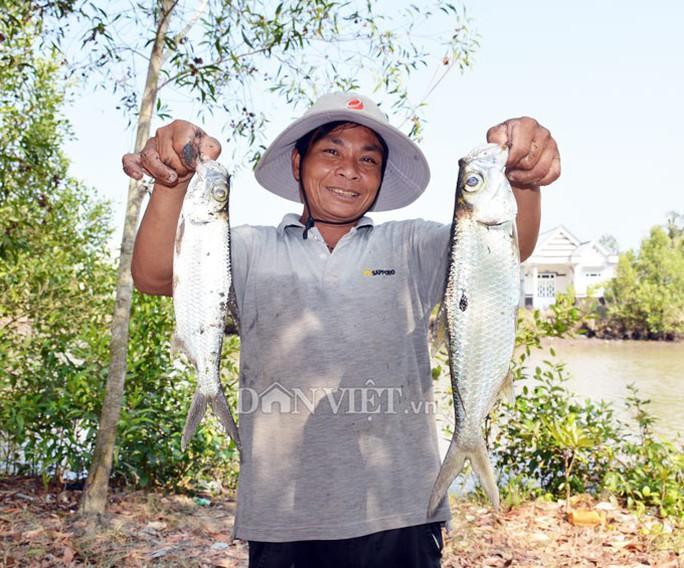 Ngợp với cảnh mỏi tay vớt cá dạt vào bờ ở Cà Mau, Bạc Liêu - Ảnh 6.