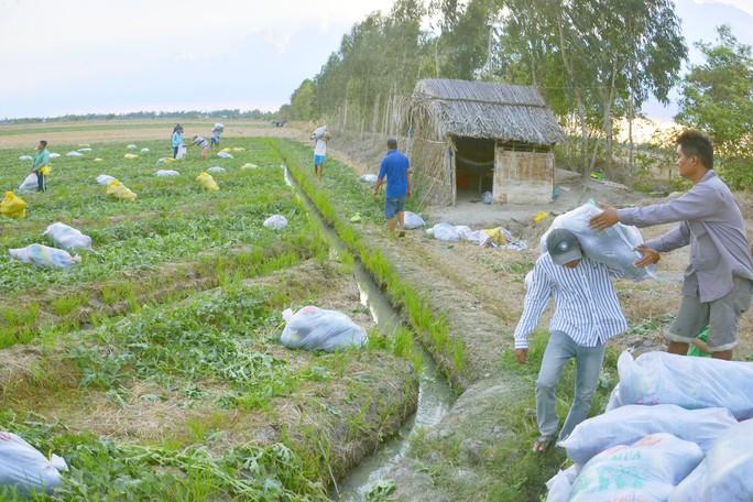Nắng cháy da, nông dân vẫn tươi cười vì được mùa dưa hấu ngọt - Ảnh 8.