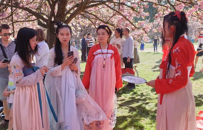 Tết Thượng tị hất văng lễ hội Hanami - Ảnh 1.