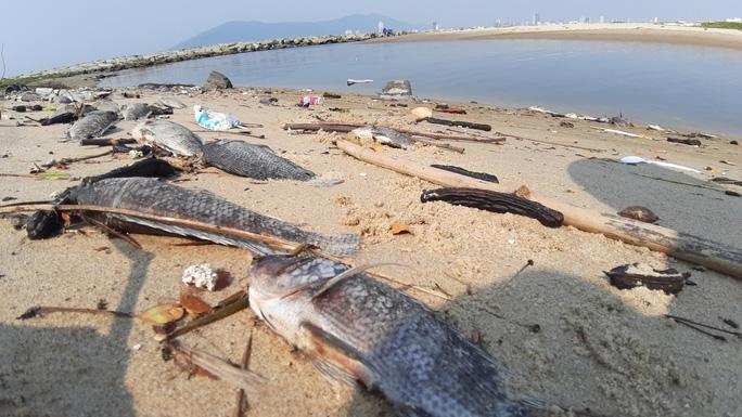 Đà Nẵng: Cá chết do hàm lượng ô xy hòa tan không đảm bảo quy chuẩn - Ảnh 2.