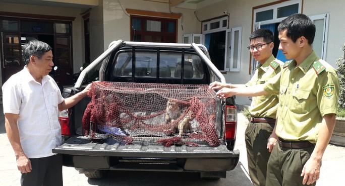 Bỏ tiền mua 2 con khỉ rồi mang đến kiểm lâm giao nộp bảo tồn - Ảnh 1.