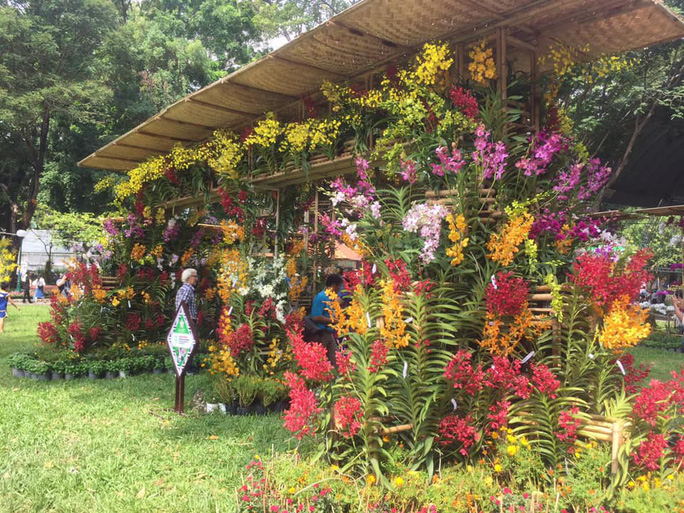 Festival Hoa lan TP HCM khai mạc, miễn phí cho khách tham quan - Ảnh 6.