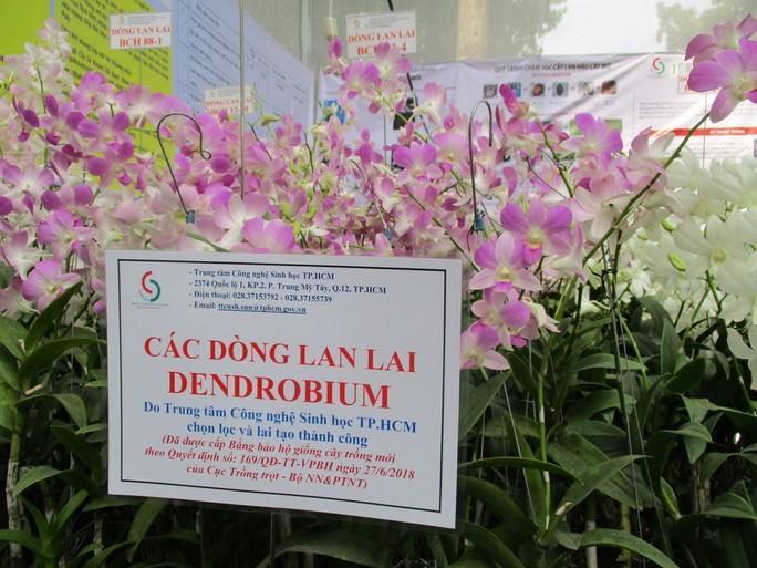 Festival Hoa lan TP HCM khai mạc, miễn phí cho khách tham quan - Ảnh 11.