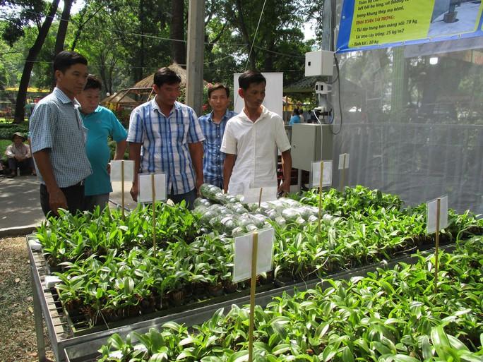 Festival Hoa lan TP HCM khai mạc, miễn phí cho khách tham quan - Ảnh 10.