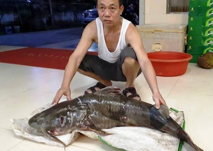 """Ngày lễ, thả câu bắt được cá ghé """"khủng"""" 22 kg, dài hơn 1 m - Ảnh 2."""