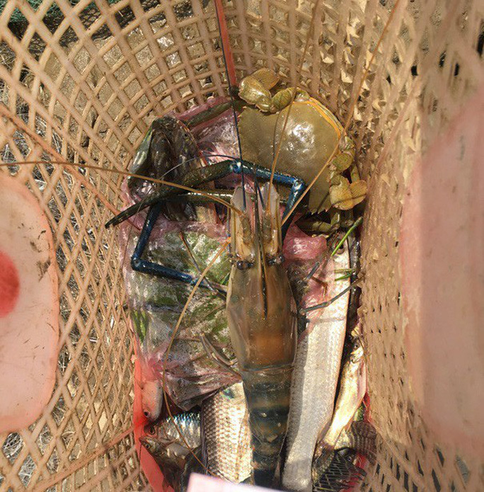 Điêu luyện lặn bắt tôm càng xanh, cua dưới sông Lam  - Ảnh 5.