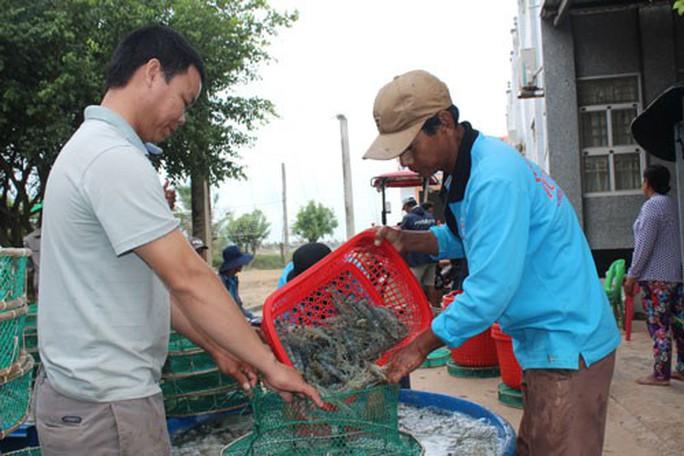 Ra mắt sàn giao dịch tôm đầu tiên ở Việt Nam - Ảnh 1.