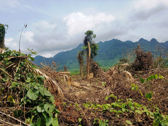 Gần 2 hecta rừng bị phá, chỉ cách kiểm lâm 500m nhưng không biết? - Ảnh 1.