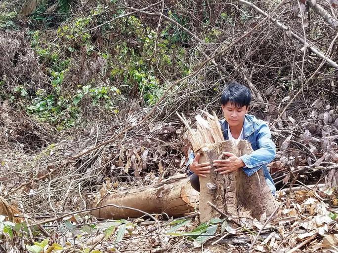 Gần 2 hecta rừng bị phá, chỉ cách kiểm lâm 500m nhưng không biết? - Ảnh 2.