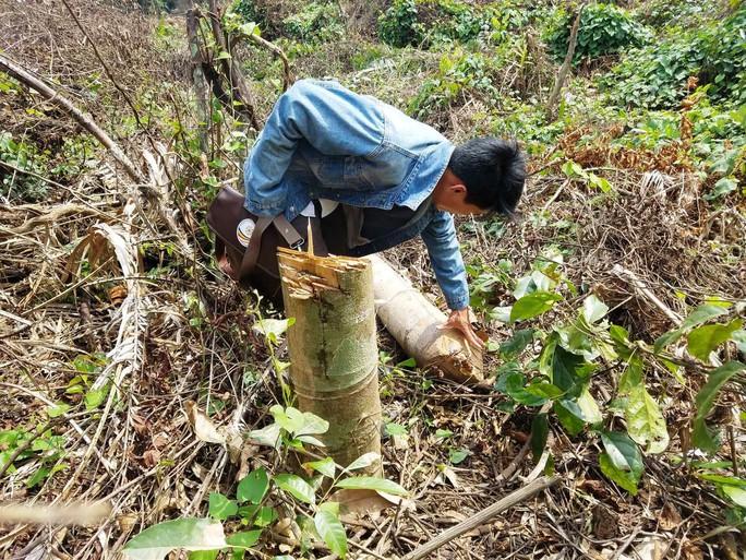 Gần 2 hecta rừng bị phá, chỉ cách kiểm lâm 500m nhưng không biết? - Ảnh 3.