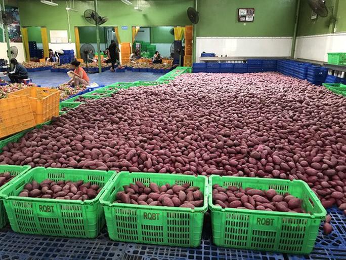 Lo nông sản Việt phải mượn đường Thái Lan để vào Trung Quốc - Ảnh 1.