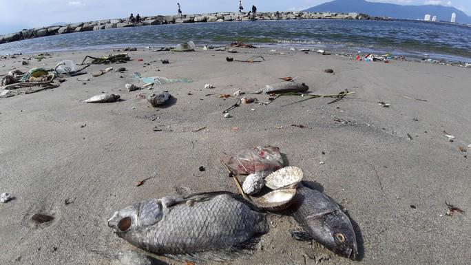Cá chết hàng loạt dạt vào bờ trên bãi biển Đà Nẵng - Ảnh 1.
