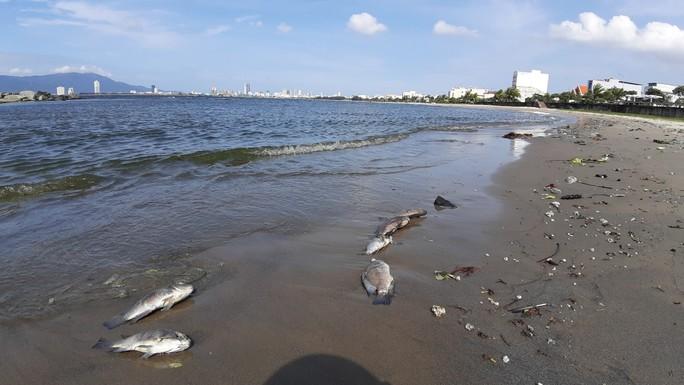 Cá chết hàng loạt dạt vào bờ trên bãi biển Đà Nẵng - Ảnh 6.
