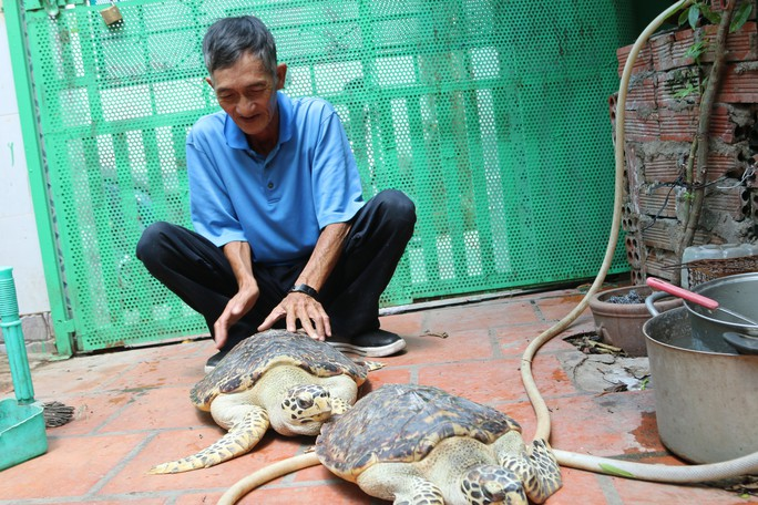 Thả 2 cá thể rùa quý hiếm về biển - Ảnh 1.