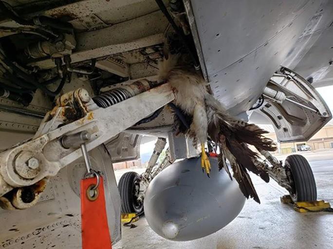 """""""Tia chớp"""" F-35 hỏng nặng vì bị chim đâm trúng - Ảnh 2."""