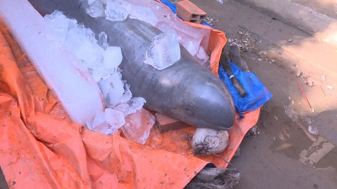 Nhận hỗ trợ 5 triệu đồng để giao xác cá nược 150 kg, ngư dân vẫn muốn được thêm - Ảnh 1.