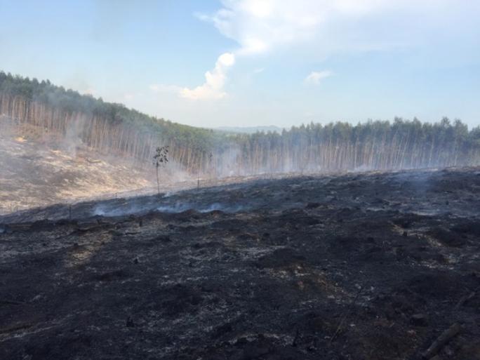 Nắng nóng làm cháy nhiều ha rừng kinh tế - Ảnh 1.