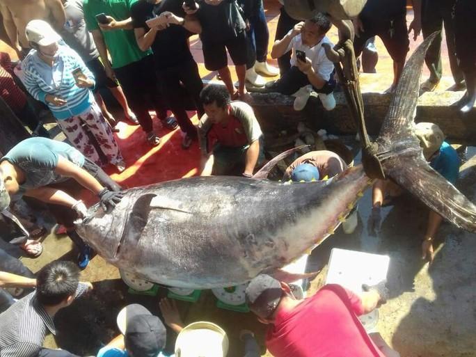 Khánh Hòa: Bắt cá ngừ đại dương khủng nặng 386kg - Ảnh 1.