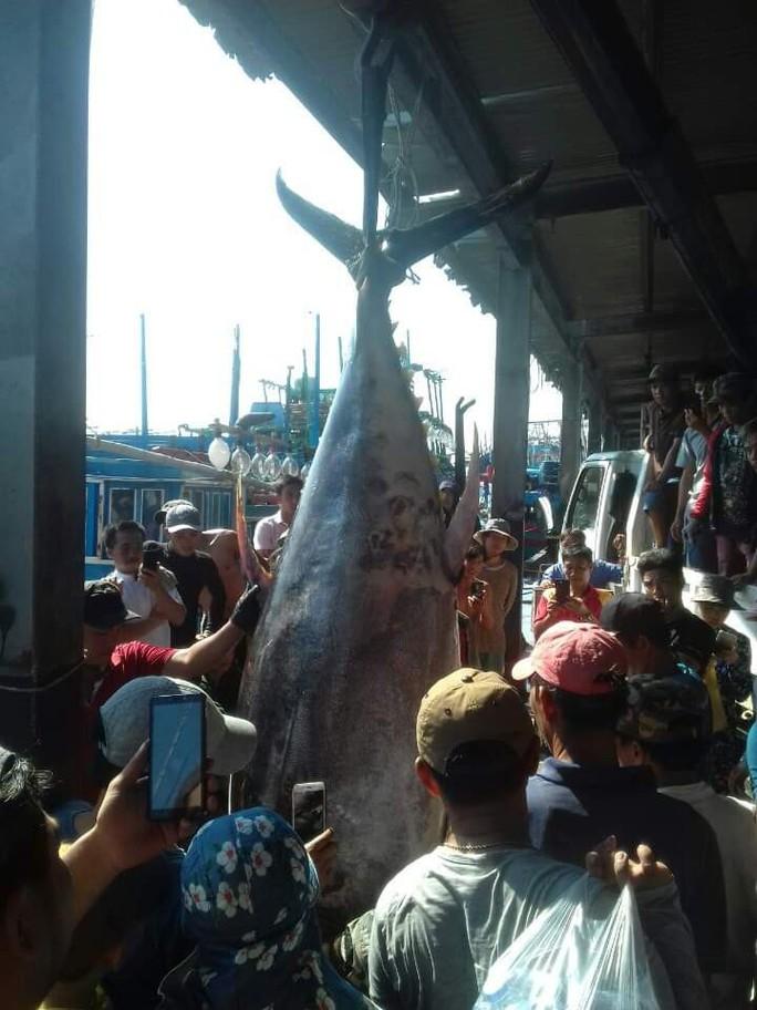 Khánh Hòa: Bắt cá ngừ đại dương khủng nặng 386kg - Ảnh 2.