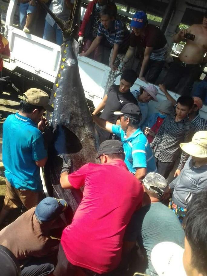 Khánh Hòa: Bắt cá ngừ đại dương khủng nặng 386kg - Ảnh 3.