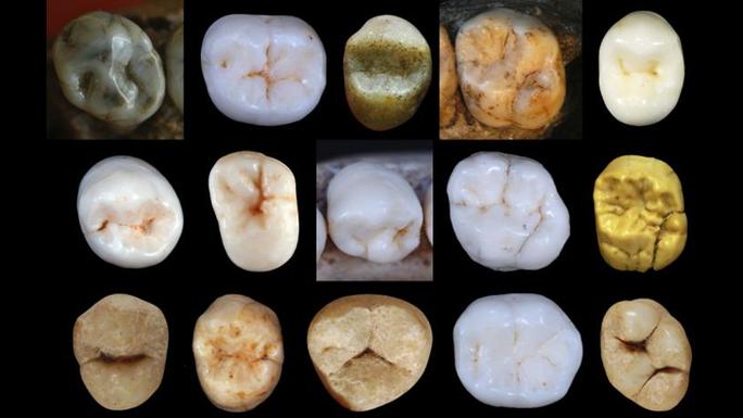 Phát hiện tổ tiên chung của người hiện đại và người tuyệt chủng - Ảnh 1.