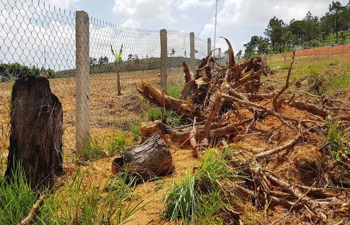 Nhờ người dọn dẹp hiện trường vụ phá rừng, một nhân viên bảo vệ rừng bị bắt - Ảnh 3.