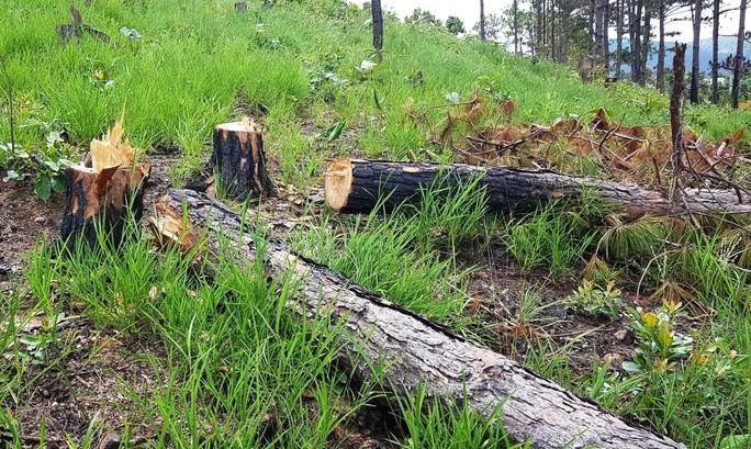 Nhờ người dọn dẹp hiện trường vụ phá rừng, một nhân viên bảo vệ rừng bị bắt - Ảnh 2.