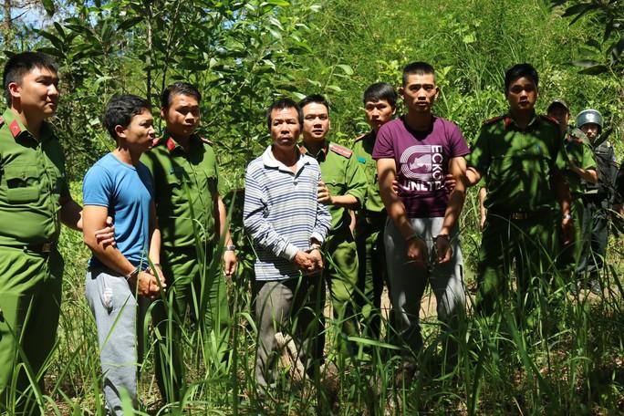 Khoan lỗ 20 cm rồi đổ thuốc diệt cỏ hạ độc 3.500 cây thông ở Lâm Đồng - Ảnh 1.
