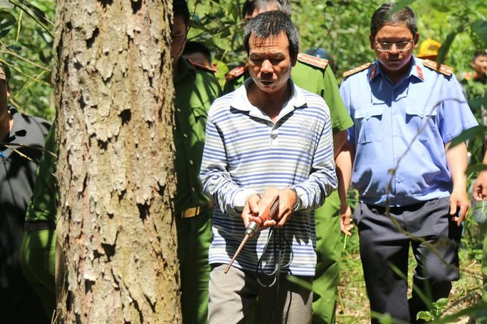 Khoan lỗ 20 cm rồi đổ thuốc diệt cỏ hạ độc 3.500 cây thông ở Lâm Đồng - Ảnh 3.