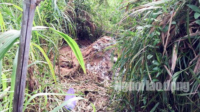 Thiếu quỹ đất, chôn heo bệnh gần khu dân cư  - Ảnh 2.