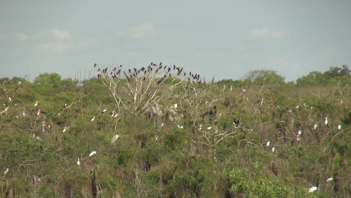 Gần 200 con cò nhạn có sải cánh hơn 1m bất ngờ xuất hiện tại Bạc Liêu - Ảnh 1.