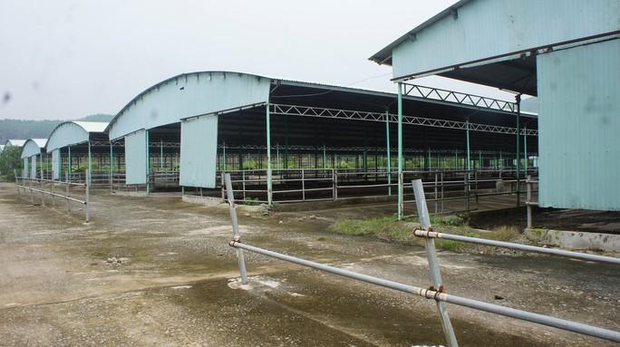 Rà soát tổng thể dự án ngàn tỉ chăn nuôi bò liên quan tới cha con ông Trần Bắc Hà - Ảnh 1.
