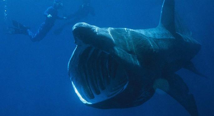Kinh ngạc với cá mập to như máy bay phản lực xuất hiện ở Mỹ - Ảnh 2.