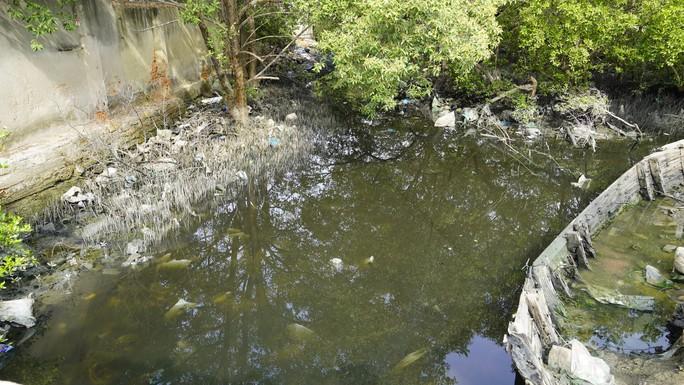 Thị sát ô nhiễm, Bí thư Tỉnh ủy tỉnh BR-VT yêu cầu thay lãnh đạo phường - Ảnh 3.