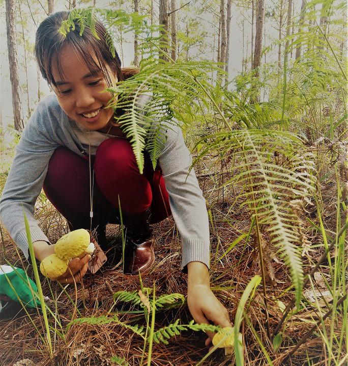 Nấm rừng thông, ăn ngon đến quên cả no - Ảnh 2.