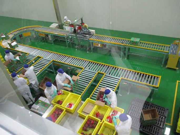 Chi tiền mạnh vào công nghệ xử lý trái cây - Ảnh 1.