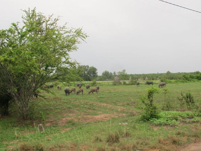 Nhiều sai phạm ở dự án Công viên Sài Gòn Safari - Ảnh 1.