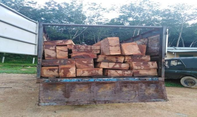 Đục khoét số khung, số máy ô tô để chở gỗ lậu - Ảnh 1.