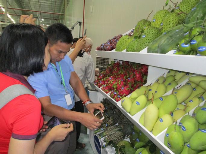 Nông sản Việt vượt rào cản, sang Trung Quốc - Ảnh 1.
