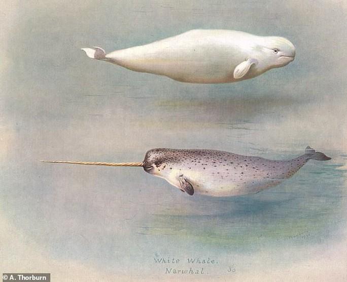 Quái vật biển kỳ dị là con lai của 2 loài khác nhau - Ảnh 5.