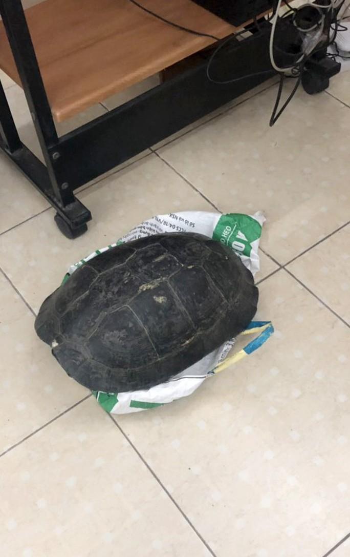 Rùa Răng quý hiếm bày bán công khai giữa trung tâm TP HCM - Ảnh 2.